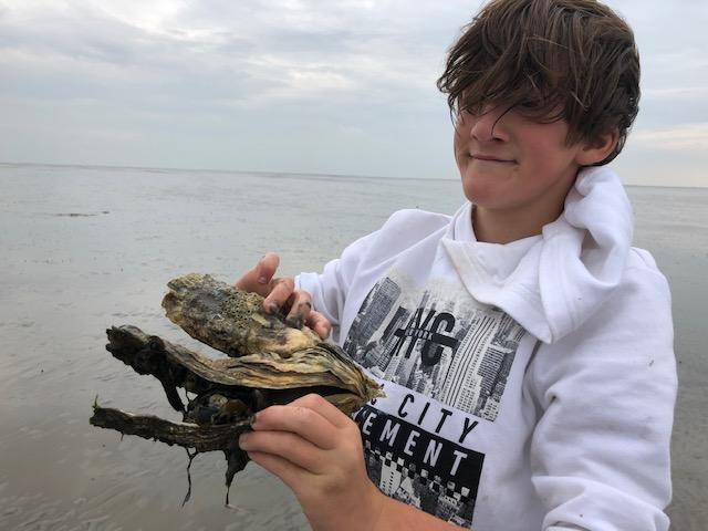 oesters zoeken wad
